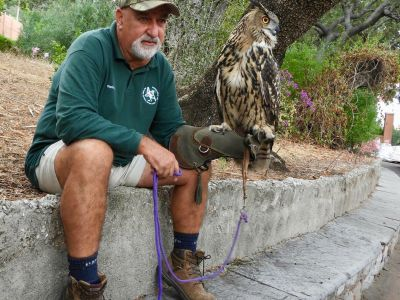 Vincent Robba with the Eagle Owl