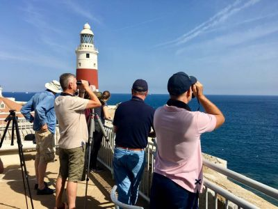 Seabird watch at Europa Point