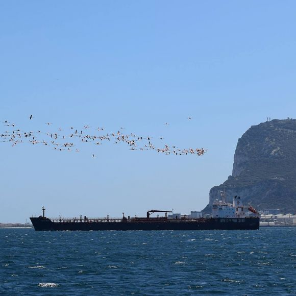 Flamingoes flying south up the Bay of Gibraltar.                                            Photo: Luisa Haasova